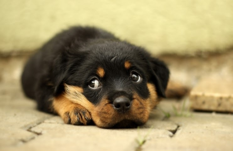 puppy laying on the floor